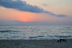 Coast. Early morning. Dog sleeping on the beach. Greece Royalty Free Stock Photography