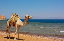 Coast of Egypt Stock Images