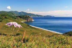 Coast flower stock photography