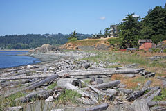 Coast of Fort Rodd. Logs on the beach at Fort Rodd Royalty Free Stock Photography