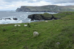 The coast of Glen Head. In Ireland Royalty Free Stock Image