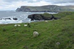 The coast of Glen Head Royalty Free Stock Image