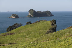 Coast with green meadow, New Zealand Royalty Free Stock Images