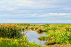 Coast of Gulf of Finland. Stock Photography