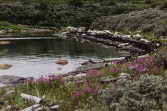 Coast lake with northern grasses and flowers. Royalty Free Stock Image