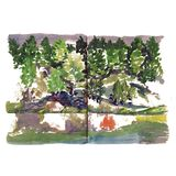 Coast lakes river pond Watercolor sketch Trees stock images