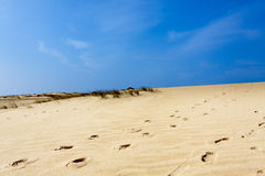 Coast of Landes, France Stock Image