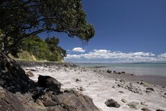 Coast line near Thames, Coromandel Royalty Free Stock Photography