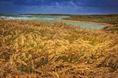 Coast line in wind, New Zealand. Coast line with wind and great colours in the Catlins, South Island in New Zealand Stock Photo