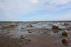 Coast at low tide. Royalty Free Stock Image