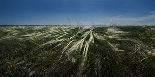 Coast marine estuary in the spring. Feather grass steppes. Stock Photography
