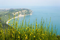 The coast from Mount Conero. Stock Images