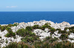 The coast near Palermo, with dwarf palms Royalty Free Stock Images