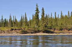Coast Northern boreal river. Stock Photo