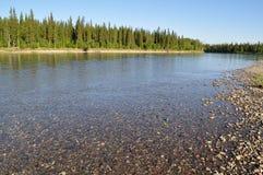 Coast Northern boreal river. Stock Photos