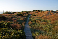 Coast Of Baltic Sea Royalty Free Stock Photography