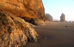 coast oregon stående Royaltyfri Fotografi