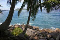 Coast and palm. Rocky coast of ocean and palm tree stock image