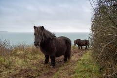 On the coast path Cornwall england uk Royalty Free Stock Images