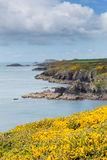 Coast Path St Non`s Pembrokeshire UK Royalty Free Stock Photos