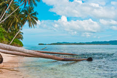 Coast of remote tropical island. Scenic coast with fallen coconut trees, Indonesia, Southeast Asia Royalty Free Stock Image
