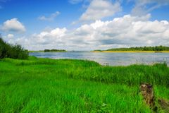 Coast of the river. Summer Royalty Free Stock Image