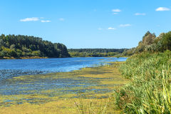 The coast of river Royalty Free Stock Image