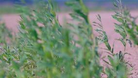Coast of river willowwacks stock video footage