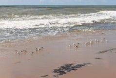 The coast of Sauipe on Bahia, Brazil. The coast of Sauipe on Bahia in Brazil royalty free stock images