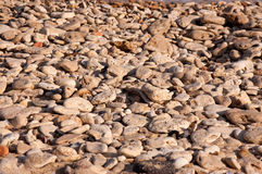 The coast with sea pebbles Stock Photography