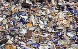Coast & Seashell Stock Photography