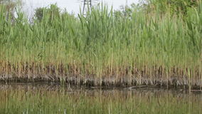 Coast small river. View from boat on river bank of small rural stock footage