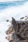 Coast with Stones of volcanic flow Royalty Free Stock Photos
