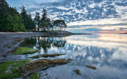 Coast at Sunrise with Trees Reflected Royalty Free Stock Photography