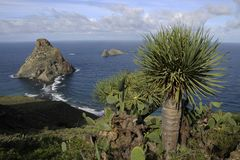 Coast of Tenerife. Coast of Atlantic ocean with typical subtropical vegetation on Tenerife island Royalty Free Stock Photography