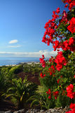 Coast in Tenerife South with tropical vegetation.Canary Island ,Spain Stock Image