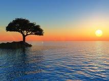 Coast Tree Stock Image