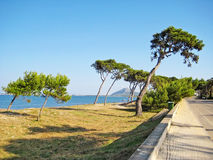 Coast with trees and grass beach between Alcudia and Pollenca, Majorca. Trees at coast on grassland, ocean view with mountain in background, road aside Stock Photography