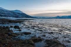 Coast of Tromso city in Tromsoya Island under the Midnight Sun i Royalty Free Stock Images