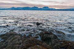 Coast of Tromso city in Tromsoya Island under the Midnight Sun i Royalty Free Stock Photography