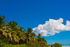 The coast of the tropical sea Stock Images