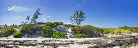 Coast vegetation panorama stock photography