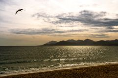 Coast view in cannes, france royalty free stock image