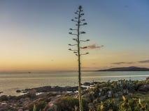 Coast View of Piriapolis Royalty Free Stock Image