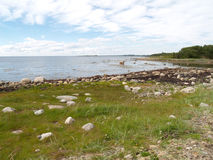 The coast of the White Sea at the Big Solovki island, Russia Royalty Free Stock Images