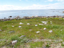 The coast of the White Sea at the Big Solovki island, Russia Royalty Free Stock Image