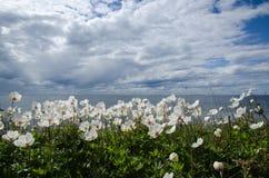Coastal backlit anemones Stock Image