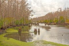 Coastal Bayou in Winter. In the Santee Coastal Reserve in South Carolina royalty free stock photo