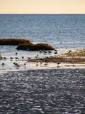Coastal Birds On Beach Royalty Free Stock Image