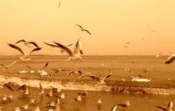 Coastal birds Royalty Free Stock Photos